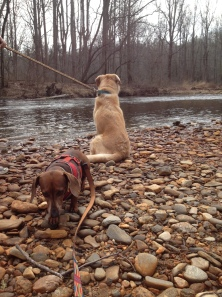 Hester and Pretzel by the Davidson River